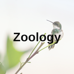 zoology library